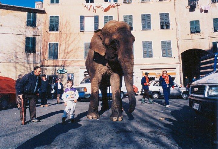 elefante a Voltri
